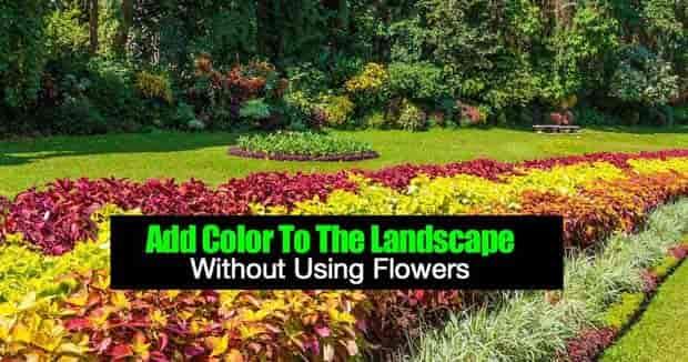 agrega color al paisaje sin flores