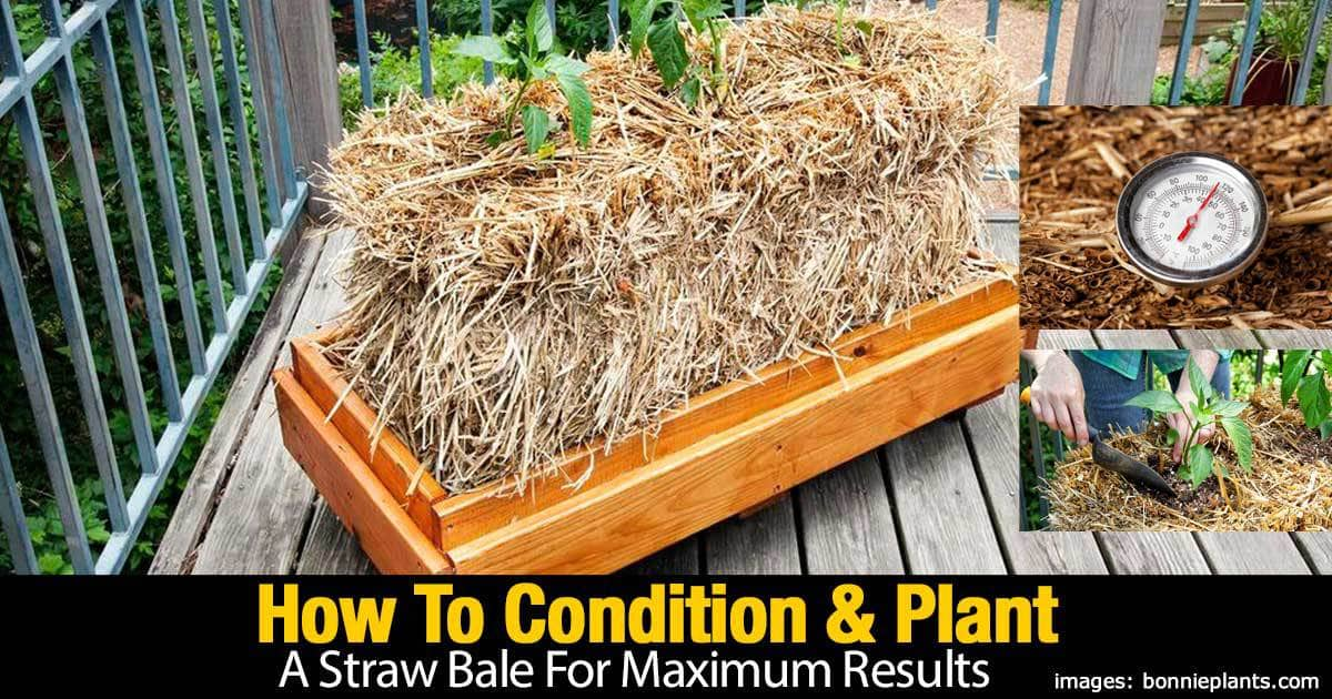 How To Condition And Plant A Straw Bale For Maximum Results