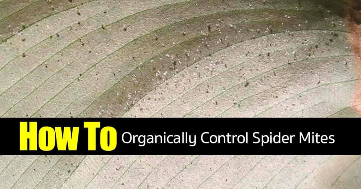 how to stop spider mites