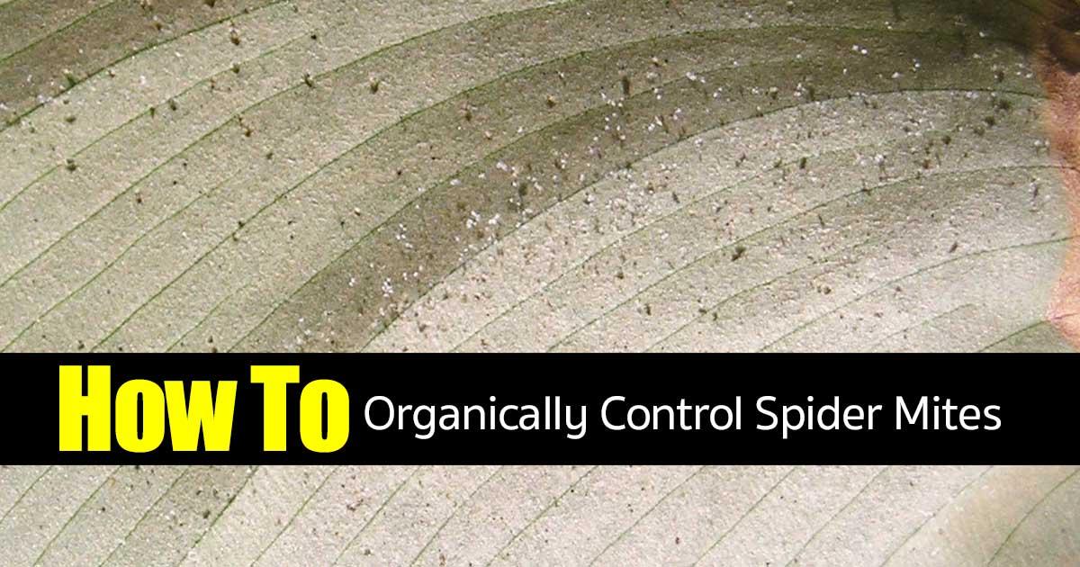 spider mites control