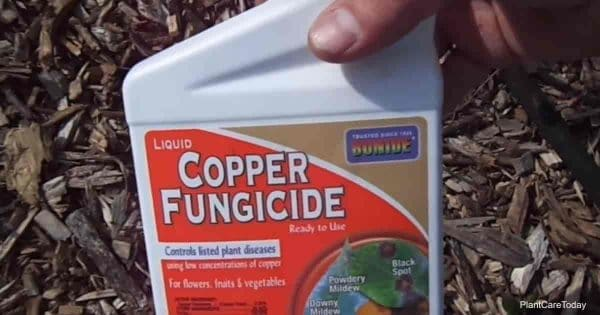 copper fungicide label