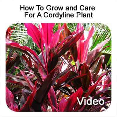 How Do You Care For Bushes 28 Images How To Care For