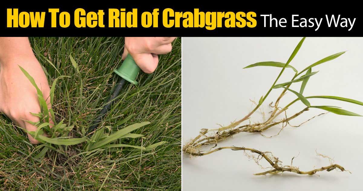 Get Rid Of Crabgr The Easy Way