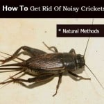 crickets-092613