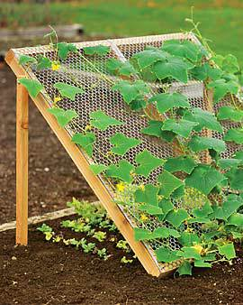 How to grow cucumbers with a cool trellis for 1000 designs for the garden and where to find them