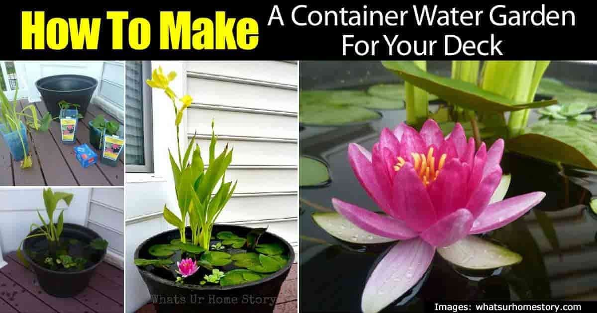 container water garden on the back patio