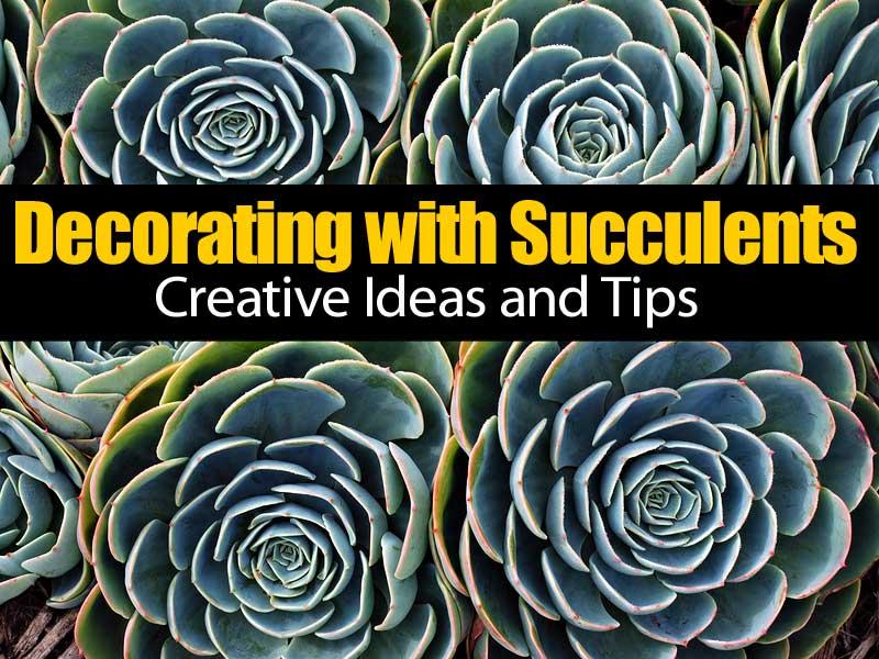 decorating-succulents-083114