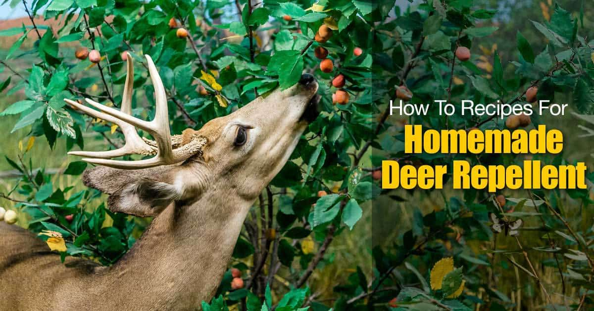 How To Recipes For Homemade Deer Repellent
