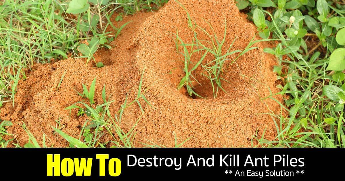 Natural Way To Kill Queen Ant