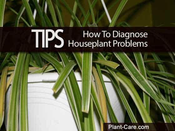 diagnose-houseplants-011514