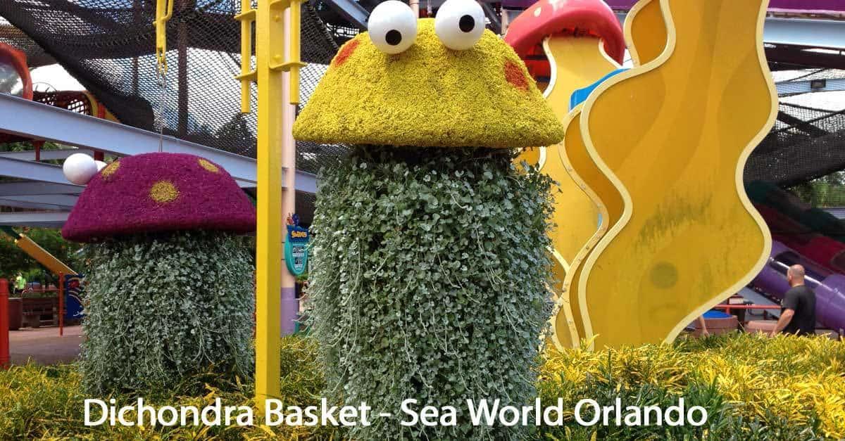dichondra-basket-seas-world-093014