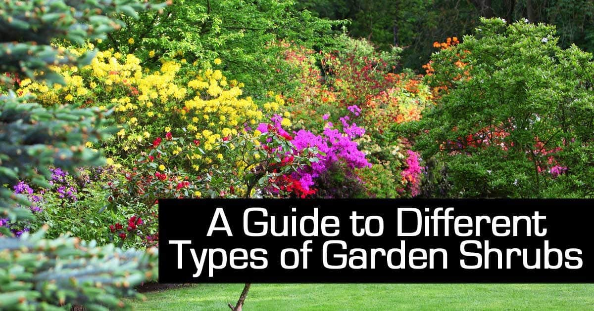 A guide to different types of garden shrubs for Garden plants names and pictures
