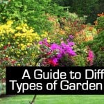 A Guide to Different Types of Garden Shrubs