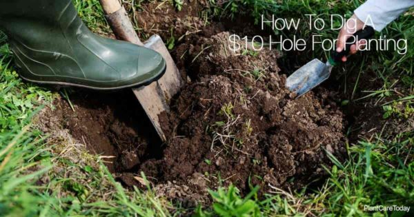 shovel and hand spade digging a hole for planting