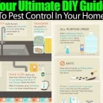 Your Ultimate DIY Guide To Pest Control In Your Home