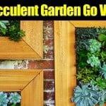 DIY Succulent Garden Go Vertical