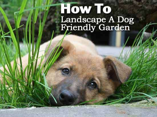 How to landscape a dog friendly garden for Dog friendly landscape design
