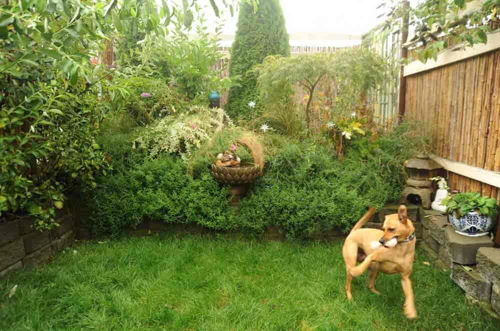 Cómo deshacerse de las pulgas en tu jardín