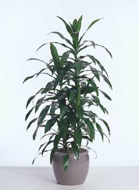 top 10 indoor plants that clean air