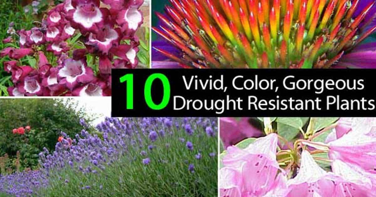 drought-resistant-plants-01312016