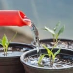 Drowning Plants – Diseases Start When Soils Don't Dry Out