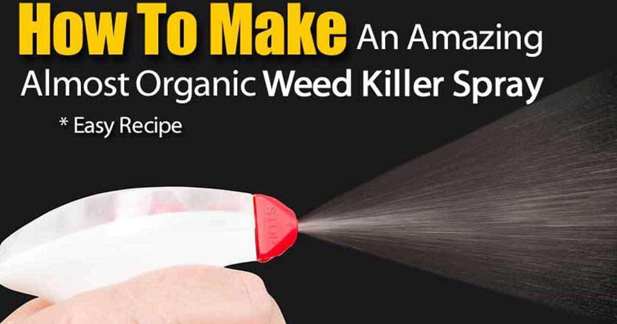 easy-organic-weed-killer-10312015