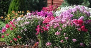 45 Easy Perennials: Flowers That Come Back Every Year [GUIDE]