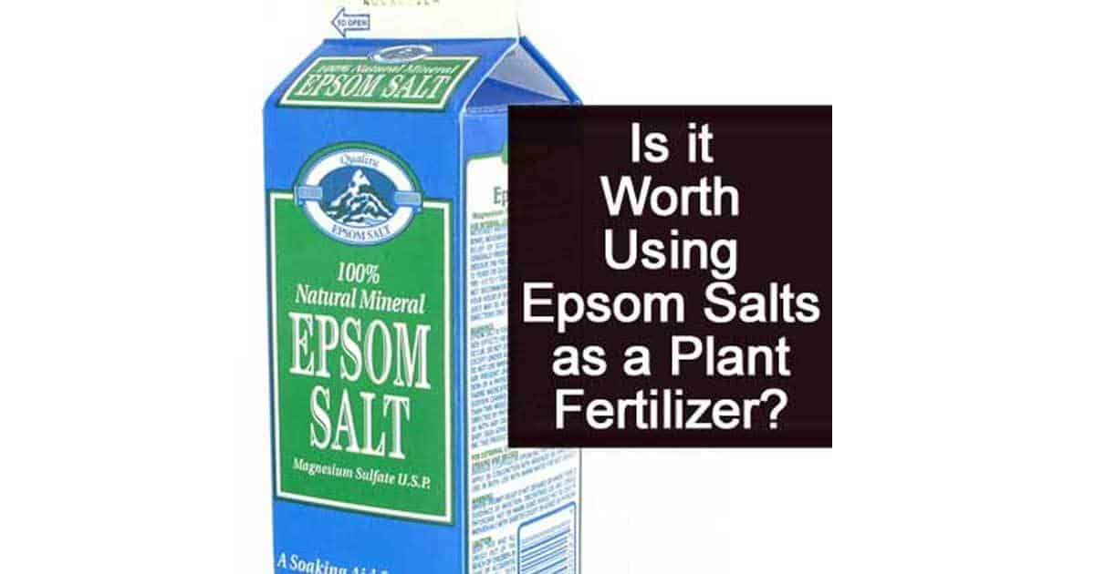 Is it Worth Using Epsom Salts as a Plant Fertilizer