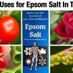 10 Proven Uses for Epsom Salt In The Garden