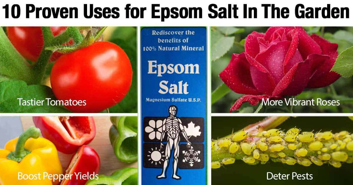 10 proven uses for epsom salt in the garden