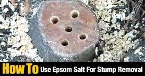 stump drilled holes to add epsom salt