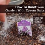 Boosting Your Garden Results With Epsom Salts