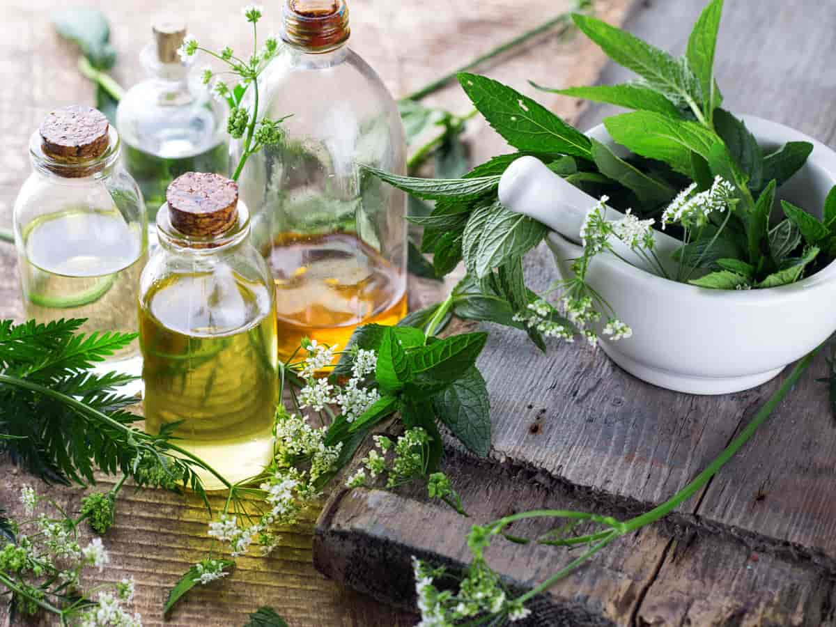 Essential oils for poison ivy relief