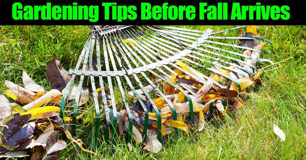 Fall Gardening Tips What To Do Before Fall Arrives