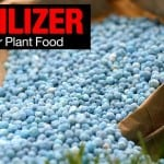 Fertilizer Numbers: How To Read The Numbers On Fertilizer Bags