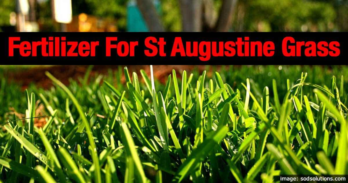 Best Fertilizer For St Augustine Gr Plantcaretoday