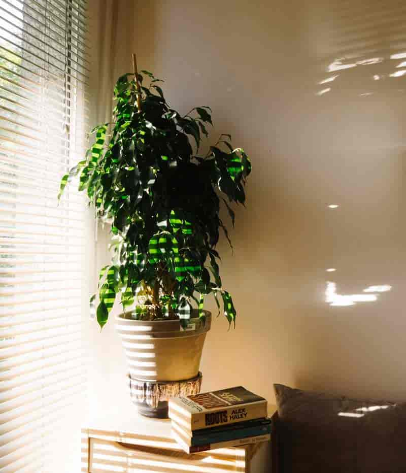 35 of the Best Indoor Plants For Your Home! Grow Light Indoor House Plant Html on indoor orange tree leaf, boston fern care indoor plant light, 3 tier plant stand grow light, indoor plants grow without soil, indoor house plants trees, dracaena house plant low light, indoor plants that can grow in water, indoor houseplants fern, indoor green plants with heart shaped leaves, indoor green plant name,
