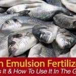What Is Fish Emulsion Fertilizer, [HOW TO] To Use It In The Garden?