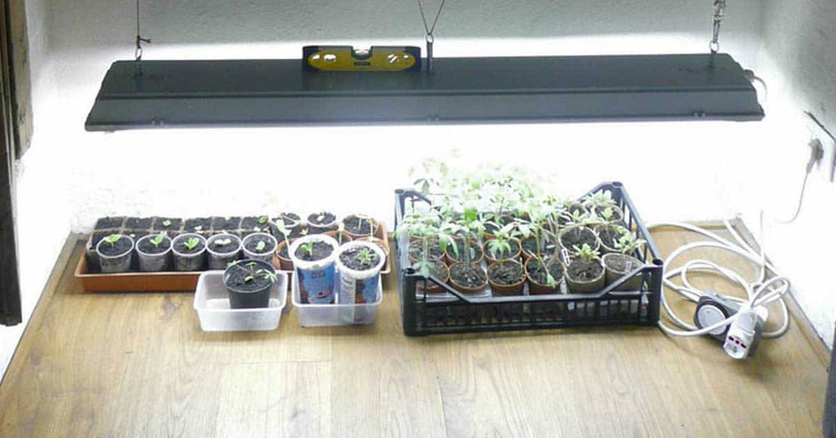 fluorescent-grow-lights-10312015