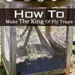How To Make The King Of Fly Traps