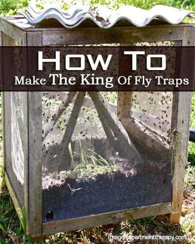 how to make the king of fly traps. Black Bedroom Furniture Sets. Home Design Ideas