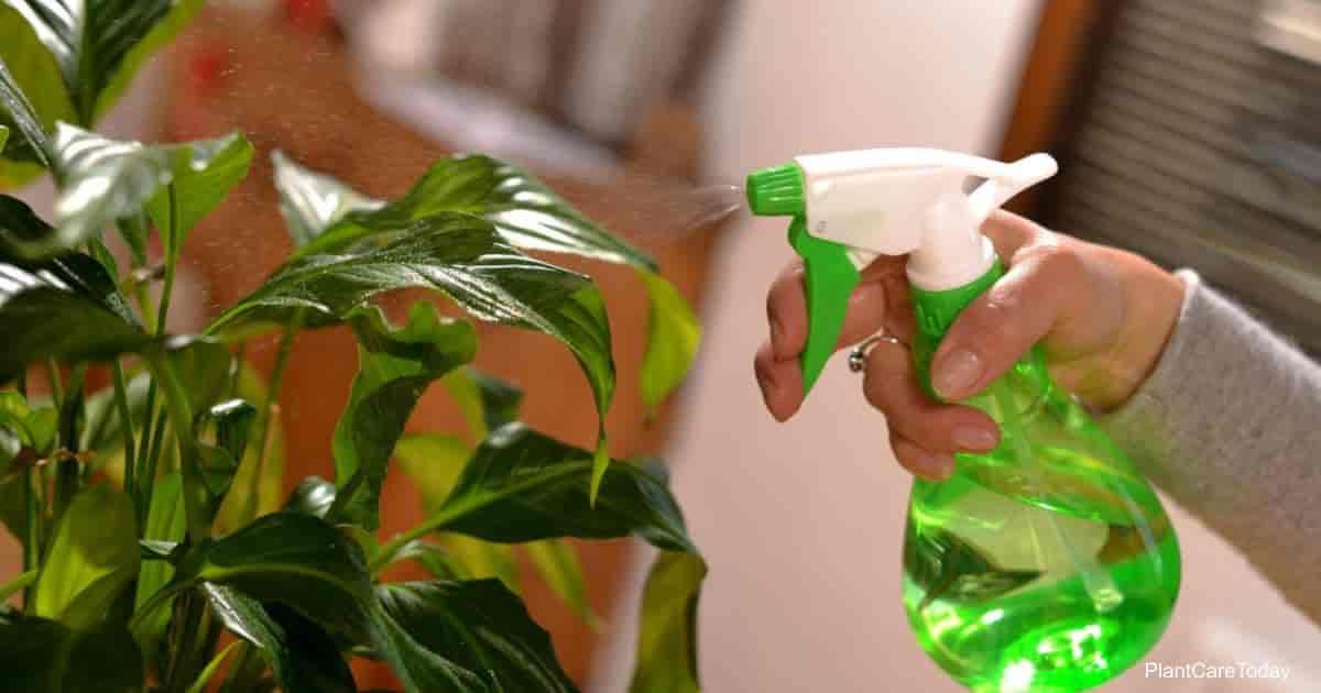 Foliar feeding plants with liquid plant food spray