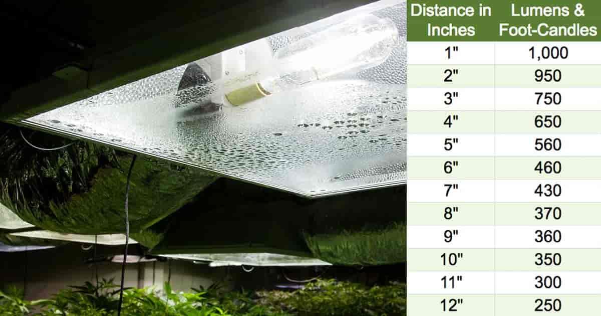 gráfico con lúmenes o velas en la distancia de iluminación de la planta