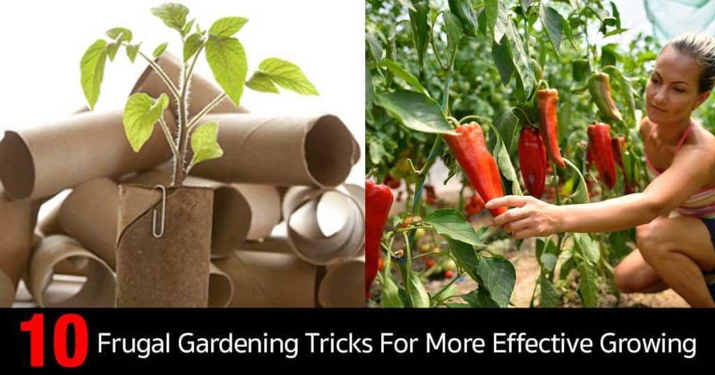 frual-garden-tricks-11302016