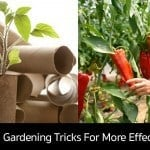 10 Frugal Gardening Tricks For More Effective Growing