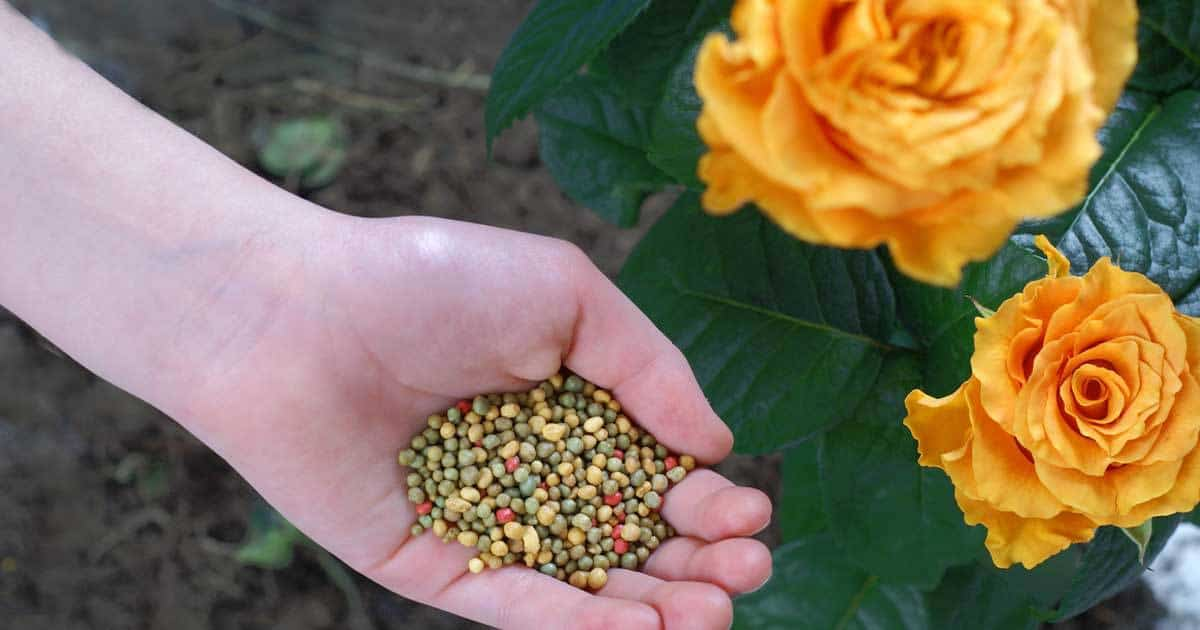 Garden Fertilizer How And What To Use For Feeding Plants