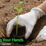 Garden Gloves – How To Protect Your Hands In The Garden