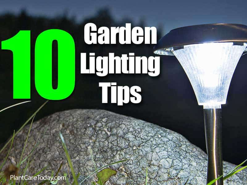 10 garden lighting tips 3 how to best use spotlights in the landscape - A buying guide for garden lights ...