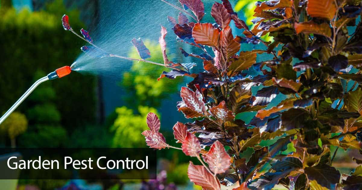 Garden Pest Control: How To Pesticide Tips For Homeowners -