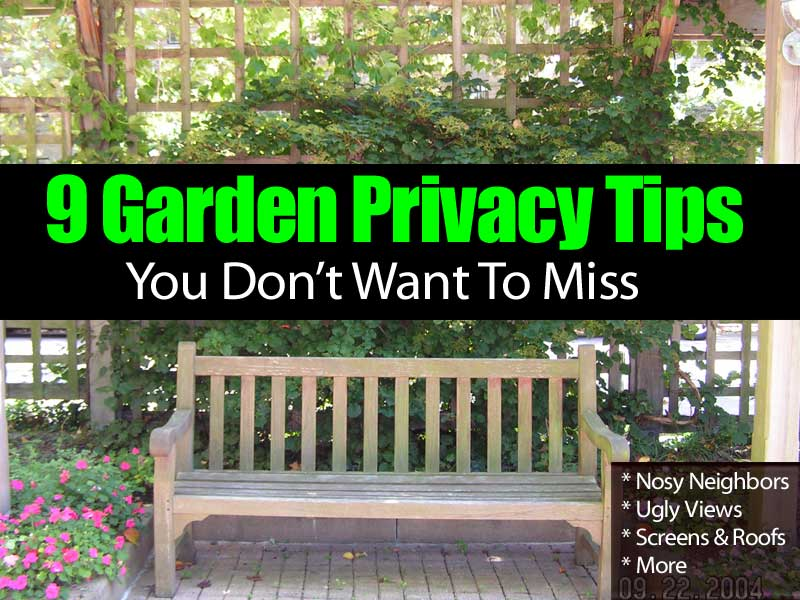 Gentil 9 Garden Privacy Tips You Donu0027t Want To Miss
